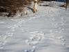 Jälkiä lumessa-maalis-17